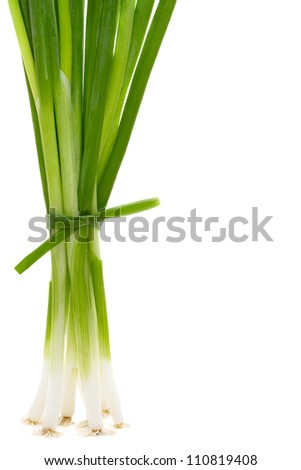 young green onions with space for text  isolated on white