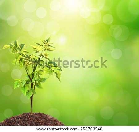 Young green plant and background - stock photo