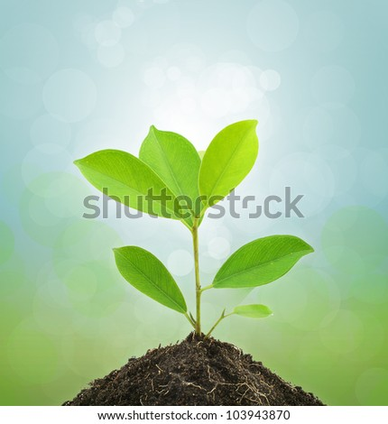 Young Green Plant and Soil on Green background. - stock photo