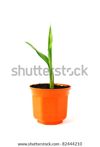 Young green plant in orange pot