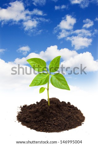 Young green plant isolated on a sky background - stock photo