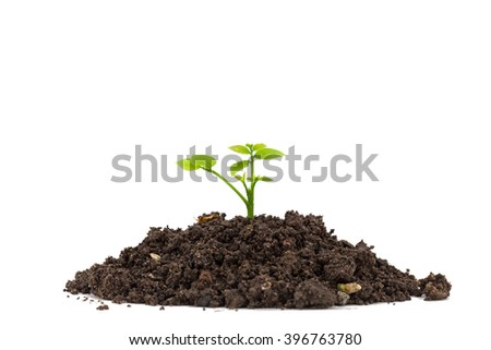 Young green plant on  the soil ,on white background.