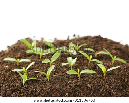 Young green plants in soil isolated on white