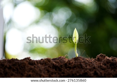 Young green seedling of plant germinate from the black soil - stock photo