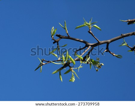 young green shoots of pear on background of blue sky 