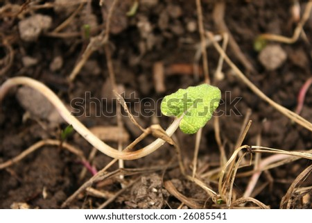 Young Green Sprout in Early Spring - stock photo