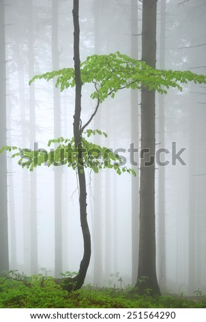 Young green tree in dense forest fog - stock photo