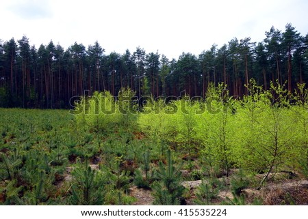 young green trees in forest