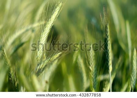 Plant Waving Stock Photos, Royalty-Free Images & Vectors ...