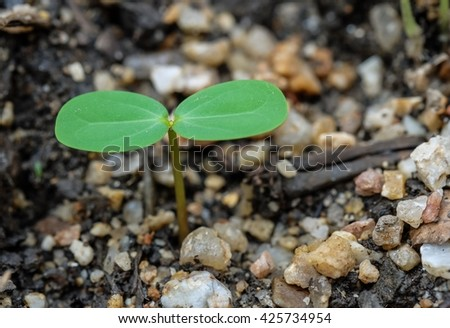 Young growing plant on the ground, growing seed  - stock photo
