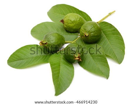 Young guava fruits with leaves isolated on white background