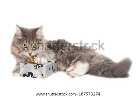 Young guilty looking cat with one paw on a wrapped gift, isolated on white - stock photo