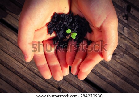 Young ||Hands holding a seedling - stock photo