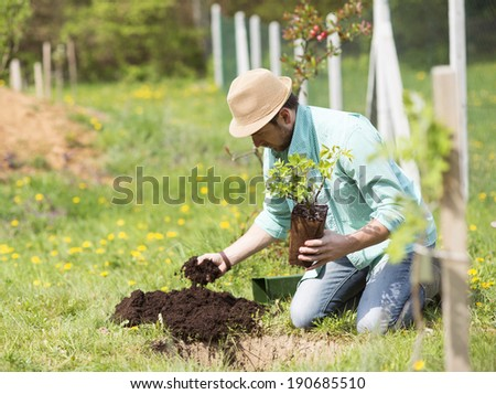 Young handsome man planting a small tree in his backyard garden - stock photo