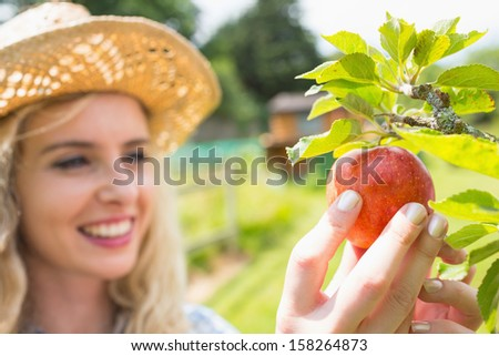 Young happy blonde picking an apple from a tree on a sunny day in orchard