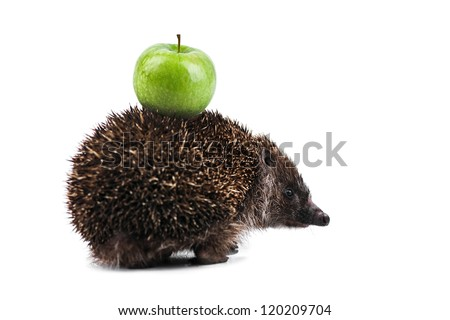 young hedgehog with apple isolated on white - stock photo