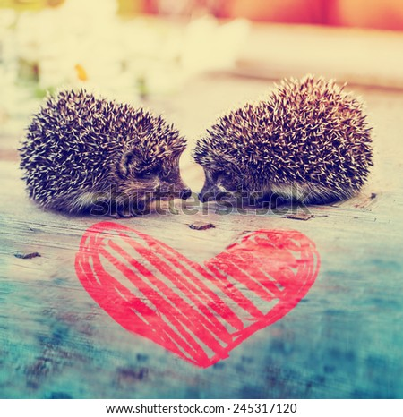 Young hedgehogs with heart  - stock photo