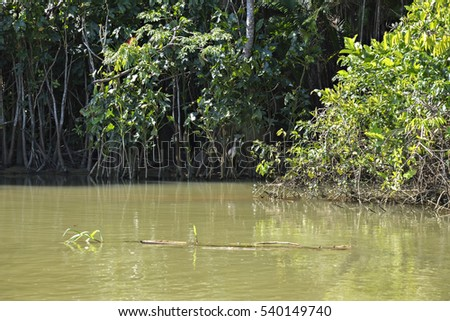 Young Heron Hiding in the Mangroves