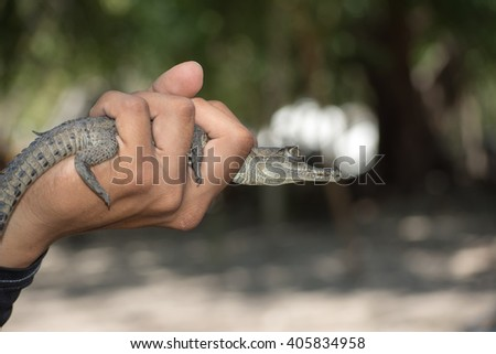 Young holds in his hand a baby alligator - stock photo