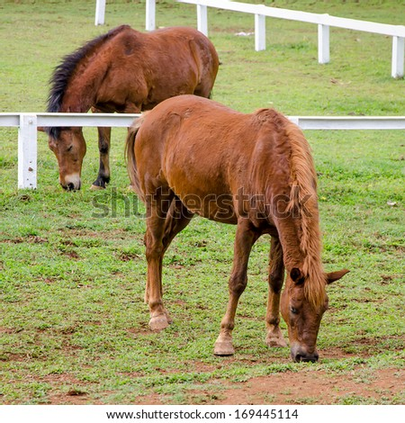 Young horse eating grass in farm - stock photo