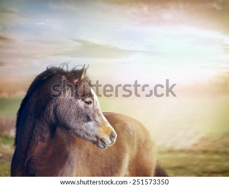 Young horse looking at background of pastures and beautiful sky - stock photo