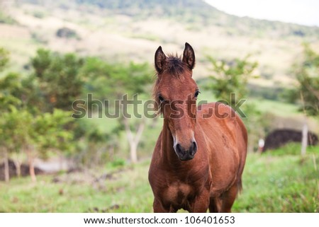 Young Horse out in the field