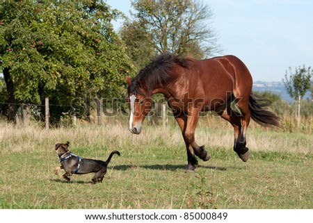 Young horse playing with a dog in the pasture