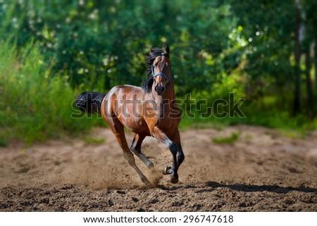 young horse runs - stock photo
