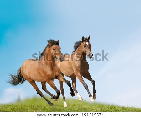 young horses - stock photo