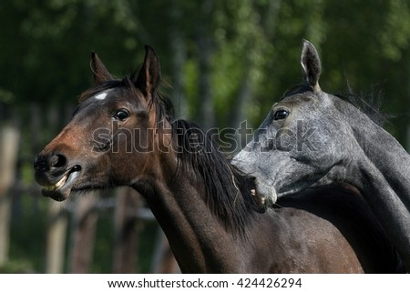 Young horses dominance play