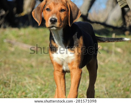 Young hunting dog in the grass. Cloudy weather