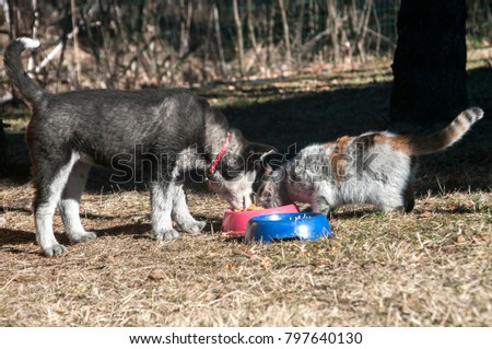 Young husky dog friendly shared his food with dirty street cat