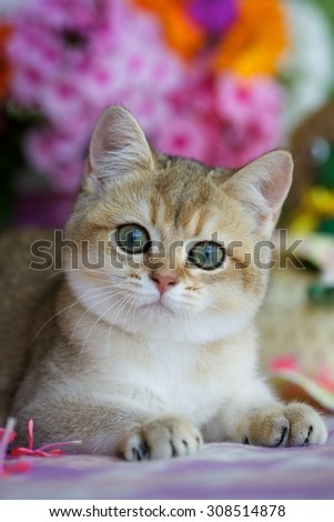 Young kitten lying on a blanket among the flowers - stock photo