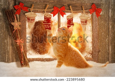young kitten playing with Christmas decoration - stock photo