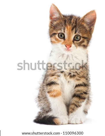 Young kitten sitting isolated on white