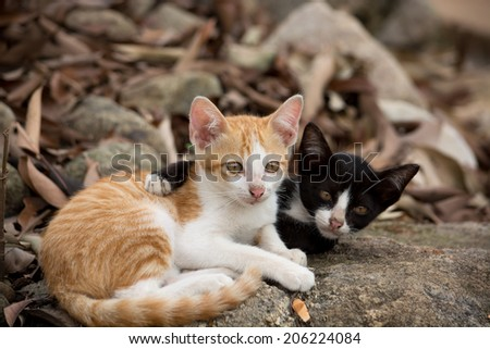 Young kittens holding on the rock in nature. - stock photo
