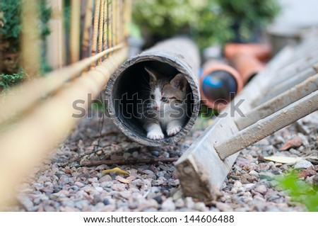 young kitty in the pipe - stock photo
