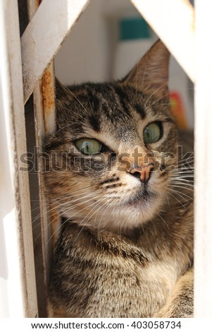 young kitty on the windowsill - stock photo