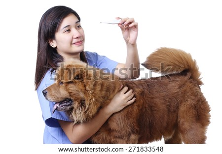 Young lady veterinarian with a dog,  reading a thermometer for temperature. Isolated in white background.