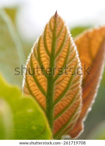 Young leaf growing - stock photo
