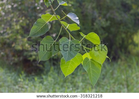 Young leaves close-up in morning - stock photo