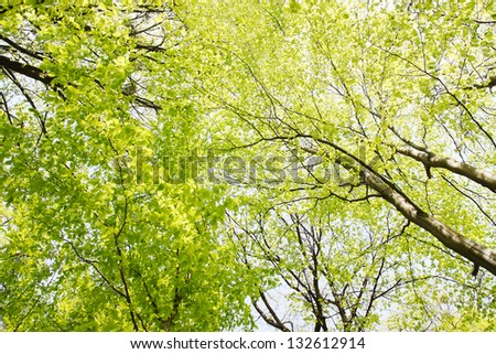 young leaves of the tree view from below - stock photo