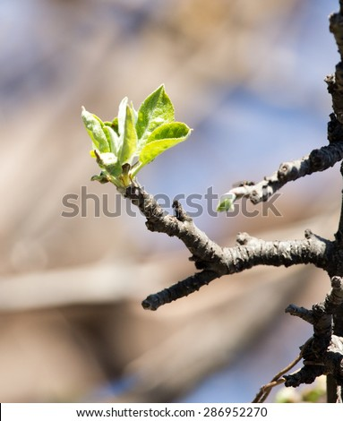 young leaves on a tree branch
