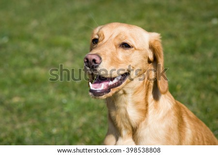 Young, light, brown dog relaxing on the huge botanic garden during lovely spring / summer sunny weather; looking happy (focus on eyes)