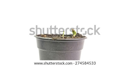 young little plant in a pot