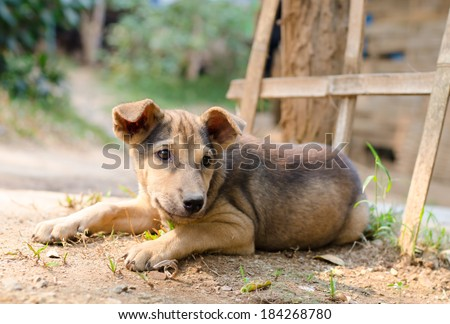 Young lonely dog lays on ground waiting for something. - stock photo