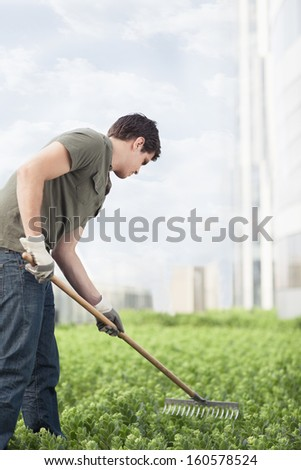 Young man gardening green plants on roof top garden in the city - stock photo