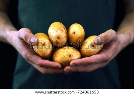 Young man holding yellow potatoes in a new crop