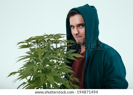 Young man in hoodie and cannabis plant. - stock photo