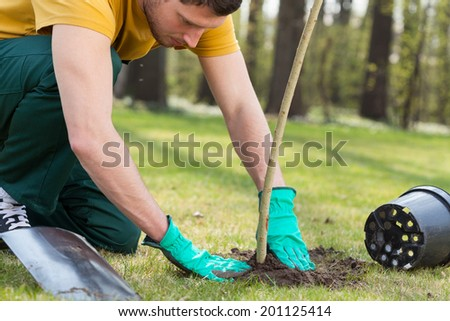 Young man kneeling during planting a tree - stock photo